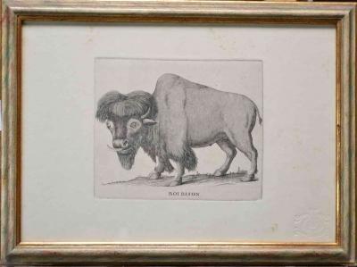 Boi Bison